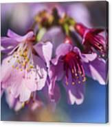Spring Burst Canvas Print