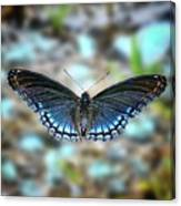 White Admiral Or Red-spotted Purple Canvas Print