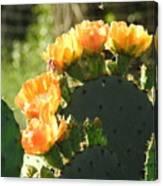 Spring Cactus 14 Canvas Print