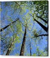 Spring Canopy Skylight Canvas Print