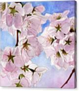 Spring- Cherry Blossom Canvas Print
