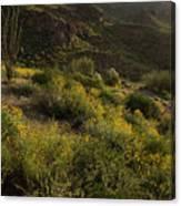 Spring Color Carpet Canvas Print