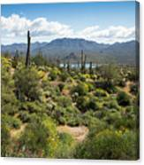 Spring Color In The Desert Canvas Print