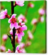 Spring Color Canvas Print
