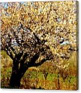 Spring Comes To The Old Cherry El Valle New Mexico Canvas Print