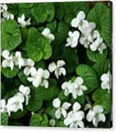 Spring Cover Canvas Print