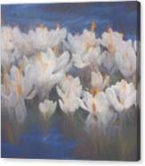 Spring Crocuses Canvas Print