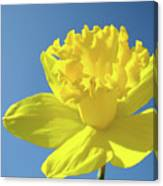 Spring Daffodil Flowers Art Prints Blue Sky Baslee Troutman Canvas Print