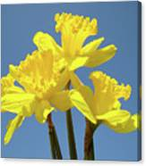 Spring Daffodil Flowers Art Prints Canvas Framed Baslee Troutman Canvas Print