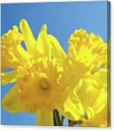 Spring Daffodils Flowers Garden Blue Sky Baslee Troutman Canvas Print