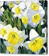 Spring- Daffodils Canvas Print