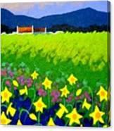 Spring Daffs Ireland Canvas Print