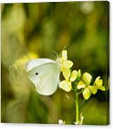Spring Day Canvas Print