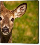 Spring Deer Canvas Print