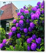 Spring  Dutch Garden  Canvas Print