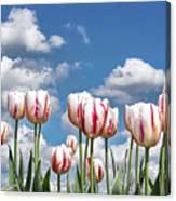 Spring Field Canvas Print