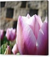 Spring Floral Tulip Flower Baslee Troutman Canvas Print