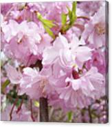 Spring Flowering Trees Art Prints Pink Flower Blossoms Baslee Canvas Print