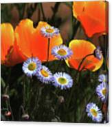 Spring Flowers In Payson Arizona Canvas Print