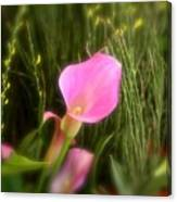 Spring Flowers No.11 Canvas Print