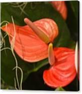 Spring Flowers No.8 Canvas Print