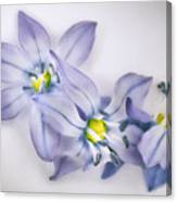 Spring Flowers On White Canvas Print
