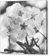 Spring Flowers - White Canvas Print