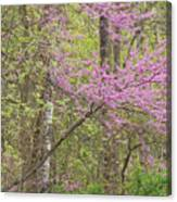 Spring Forest With Redbud Canvas Print