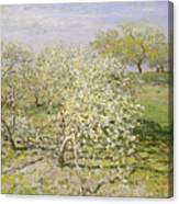 Spring. Fruit Trees In Bloom Canvas Print