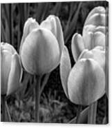 Spring Garden - Act One 2 Bw Canvas Print
