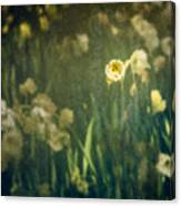 Spring Garden With Narcissus Flowers Canvas Print