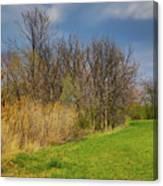 Spring Grass Canvas Print