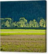 Spring Greens Canvas Print