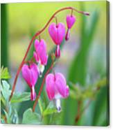 Spring Hearts - Flowers Canvas Print