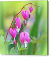 Spring Hearts - Flowers With Vignette 2 Canvas Print