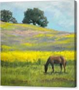 Spring Hill Grazing Canvas Print