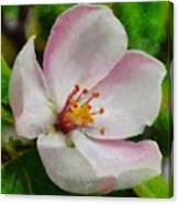 Spring - Id 16235-142747-0642 Canvas Print