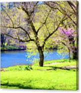Spring In Bloom Canvas Print