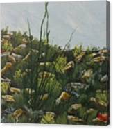 Spring In Borrego Canvas Print