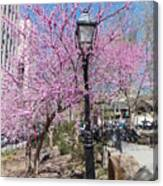 Spring In  Columbus Park 1 Canvas Print