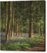 Spring In Haywood No 2 Canvas Print