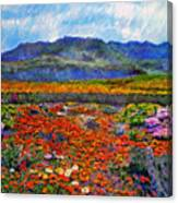 Spring In Namaqualand Canvas Print