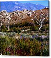 Spring In Onion Valley Canvas Print