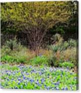 Spring In Texas Canvas Print