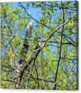 Spring In The Deep Woods Canvas Print