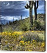 Spring In The Desert  Canvas Print
