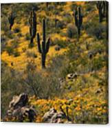 Spring In The Sonoran Desert  Canvas Print