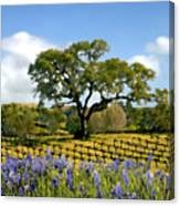 Spring In The Vineyard Canvas Print
