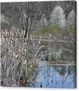 Spring In The Wetlands Canvas Print