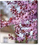 Spring In Town Canvas Print